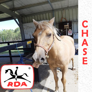 Chase | RDA Raymond Terrace - Riding For The Disabled - Horse Riding Profile