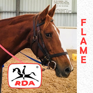 Flame | RDA Raymond Terrace - Riding For The Disabled - Horse Riding Profile