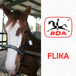 FLIKA | RDA Raymond Terrace - Riding For The Disabled - Horse Riding Profile