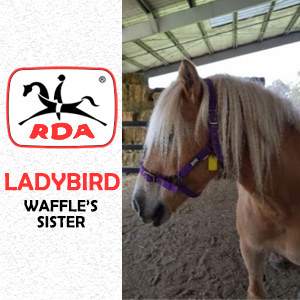 Ladybird | RDA Raymond Terrace - Riding For The Disabled - Horse Riding Profile