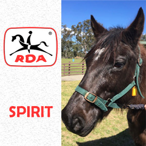 Spirit | RDA Raymond Terrace - Riding For The Disabled - Horse Riding Profile