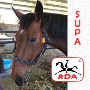 Supa | RDA Raymond Terrace - Riding For The Disabled - Horse Riding Profile